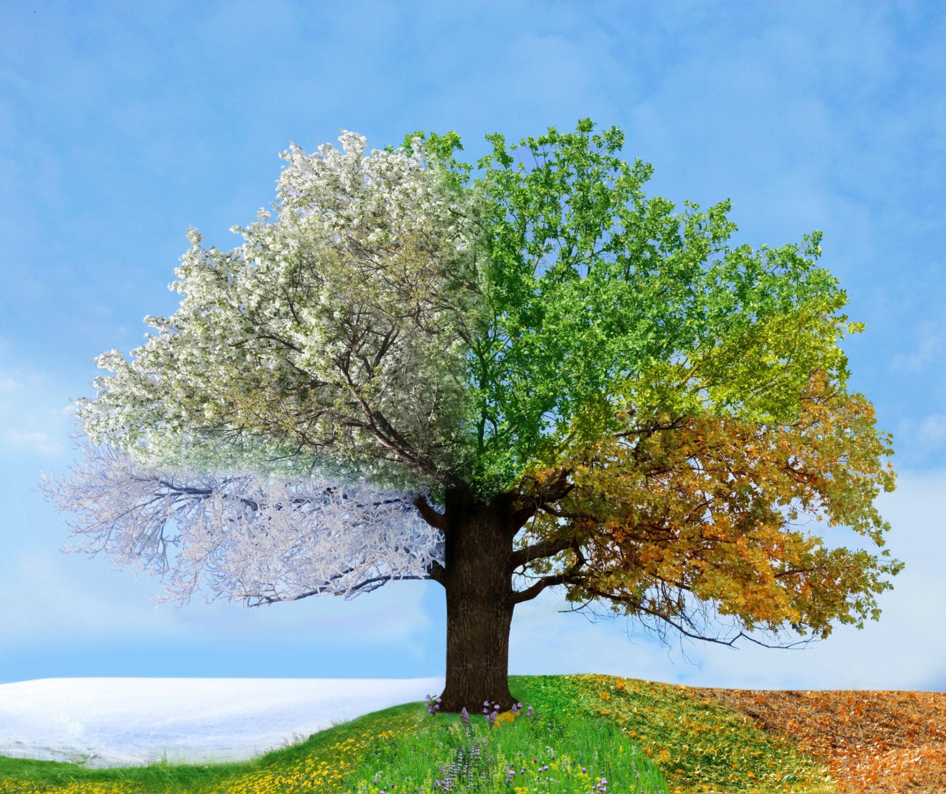 Nature renewal